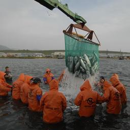 Весь ассортимент товаров из лососевых от «Витязь-Авто» - продукция устойчивого рыболовства