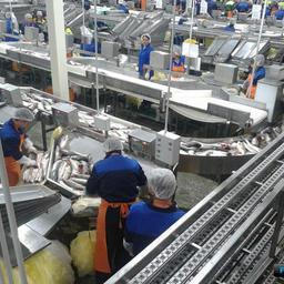 Вопросы машиностроения для нужд рыбной промышленности обсудят эксперты