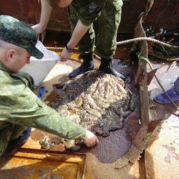 На Сахалине пограничники задержали группу, нелегально добывавшую трепанга. Фото пресс-службы ПУ ФСБ России по Сахалинской области