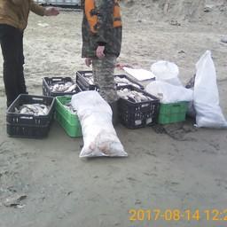 Вылов муксуна запрещен в ЯНАО, но браконьеров это не останавливает. Фото пресс-службы Нижнеобского территориального управления Росрыболовства