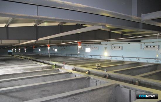 На новом заводе по современной технологии к 2015 г. компания намерена культивировать около 7 млн. штук жизнестойкой молоди трепанга ежегодно