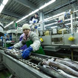 Рыбоперерабатывающий завод в Сахалинской области