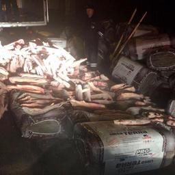 Почти 1,5 тонны русского осетра нашли полицейские Астраханской области в тайнике грузовика. Фото пресс-службы регионального УМВД России