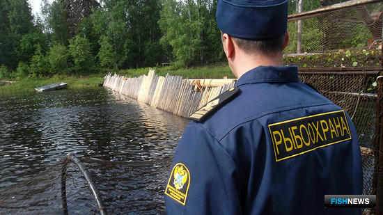Рыбинспекторов освободят от лишних обязанностей. Фото пресс-службы Двинско-Печорского теруправление Росрыболовства