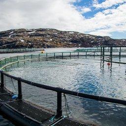 Субсидии для аквакультуры поделили между регионами