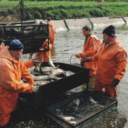Правовой капкан для рыбоводов