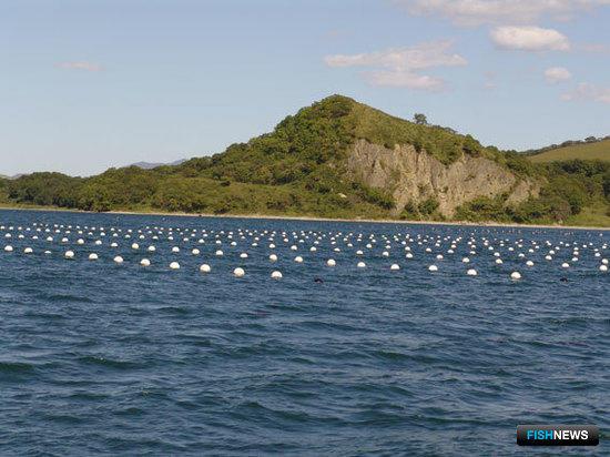 Марикультура и экология прибрежных акваторий