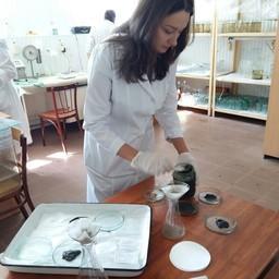Сотрудники АзНИИРХ изучают воздействие пестицидов на рыбу. Фото пресс-службы института