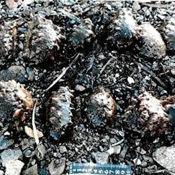 Сбор подводного урожая обернулся уголовным делом. Фото пресс-службы Управления на транспорте МВД России по ДФО