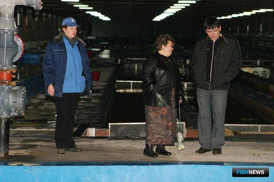 Выпуск мальков кеты и симы. Хасанский район, Приморский край, апрель 2009 г.