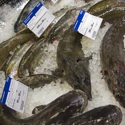 Поставщики рыбопродукции намерены отстоять свои интересы