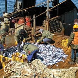 Комплексные исследования выполнялись в северной части Охотского моря в октябре и ноябре. Фото пресс-службы ТИНРО-Центра