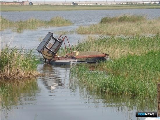 В озерах Новосибирской области рыбохозяйственные организации традиционно добывают гаммаруса. Фото регионального департамента природных ресурсов и охраны окружающей среды