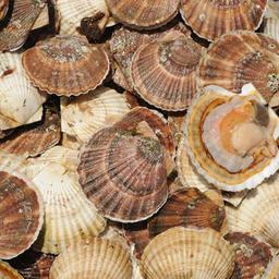 """Не допустить конфликт между предприятиями марикультуры и рыбаками """"прибрежки"""" должна специальная рабочая группа в Приморском крае"""