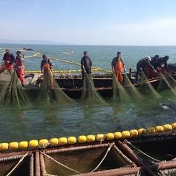 В 2016 году предприятия, занятые на промысле лососей, полнили бюджет Хабаровского края на 360 млн рублей, общие поступления от отрасли составили 1,3 млрд рублей