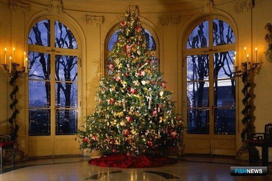 Рождественская ель в США. Фото из открытых источников
