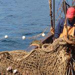 Рыбаки не могут добиться новых правил