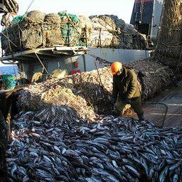 Рыбную отрасль поставят на инновационные рельсы