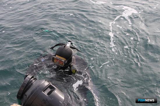 В планах компании - расширение производства морского гребешка, морского ежа и трепанга