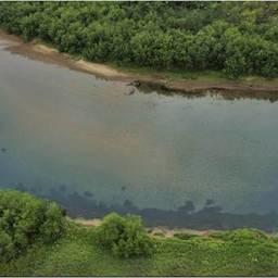 Преднерестовые скопления горбуши в реке Тымлат. Фото пресс-службы КамчатНИРО