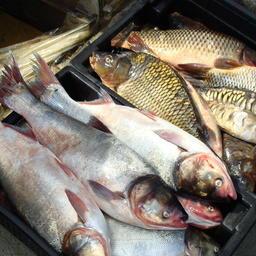 Законопроект об аквакультуре одобрил профильный комитет Госдумы