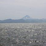 Дальневосточный лосось преодолевает арктические льды