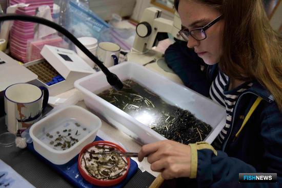 Сейчас российские и зарубежные специалисты занимаются изучением всех обнаруженных по итогам экспедиции видов. Фото пресс-службы ДВФУ