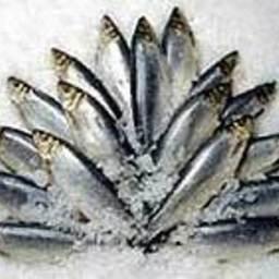 «Рузская рыбалка–2007»