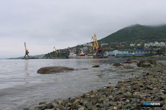 Прибрежные регионы поддержали выводы по «ветеринарному барьеру»