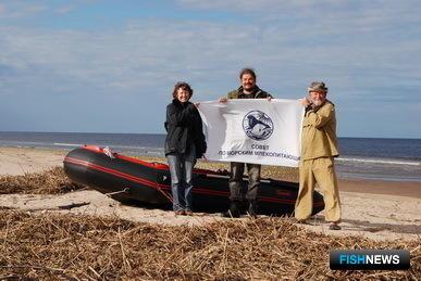 Проект «Белуха Белого моря» осуществляется при многолетней поддержке Международного фонда защиты животных (IFAW). Автор фото Иван Подгорный
