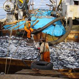 Экспертный совет поддержал предложения «рыбной» комиссии РСПП