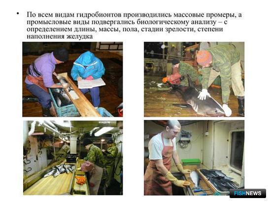 Слайд из презентации Алексея ХОРУЖИЯ для лекции