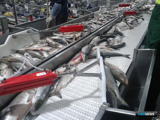 Хабаровская рыбопереработка берет новую высоту