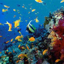Более 60% коралловых рифов на планете находятся под угрозой исчезновения