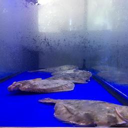 Аквариумы с живой рыбой и крабами привлекали большое внимание посетителей российского стенда