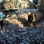Рыбаки настроены продолжать диалог с федеральными органами