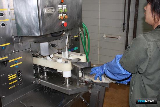 Глубокая переработка по-японски: разделка сырца на филе при помощи универсальной филетировочной машины NSB-300