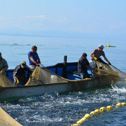 Сахалин и Курилы готовятся принимать лосось