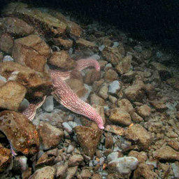 «Сахалин-2» грозит похоронить жизнь в заливе Анива