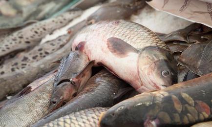 Рыбному рынку предложили госмонополию