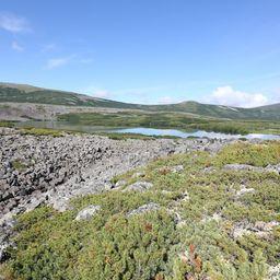 Специалисты Кроноцкого заповедника провели исследования популяций гольцов в озерах на северо-западе Камчатки. Фото пресс-службы учреждения