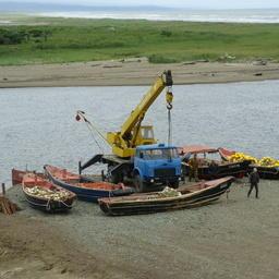 Подходы лосося на Сахалин остаются скромными