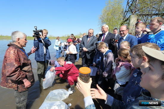 В реку Томь отправили 9 млн. штук подращенной молоди пеляди, 1,5 млн. – муксуна и 400 тыс. – сига-пыжьяна. Фото пресс-службы администрации Томской области