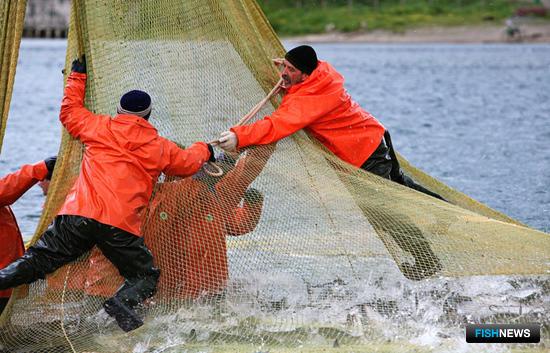 В Камчатском крае с 1 июня можно будет добывать лососей сетями в Олюторском, Усть-Камчатском, Алеутском, Тигильском районах и Кроноцком заливе