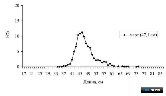 Рисунок 7. Размерный состав минтая в промысловых снюрреводных уловах в январе-марте 2015 г. в северной части Охотского моря