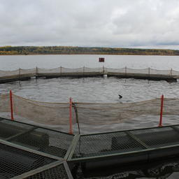 Рыбопромысловые участки в Коми решили перевести в рыбоводные