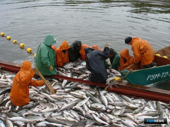 Рыбаков ориентируют на вылов 431 тыс. тонн лосося