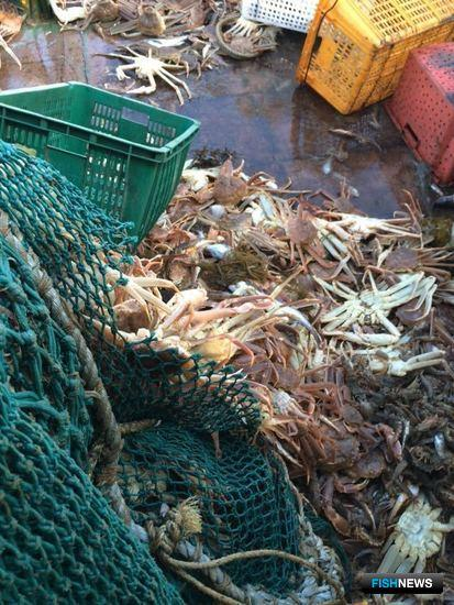 Приморские пограничники задержали в заливе Петра Великого судно, на борту которого находилось более 1,3 тыс. нелегально добытых крабов. Фото пресс-группы погрануправления