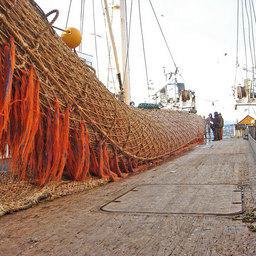 Растет вылов тихоокеанской сельди: 2009 год – 193 тысячи тонн, 2010 год – 221,2 тысячи тонн, 2011 год – 294,4 тысячи тонн, с начала 2012 года вылов тихоокеанской сельди составил 111 тысяч тонн.