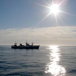 К середине июня во всех районах промысла рыбаки добыли более 2,172 млн тонн.